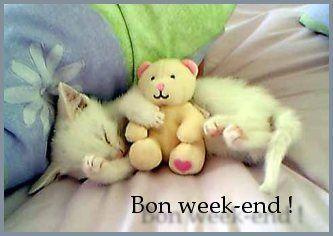 """Résultat de recherche d'images pour """"image chat bon week end"""""""