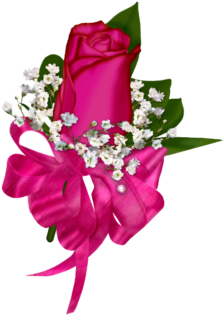 Très jolie rose