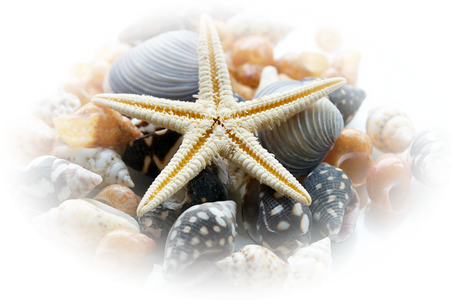 vives les vacances à la mer  705f2938